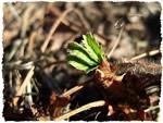 Проведите первый обкос травы у дома
