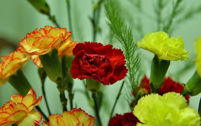 Букет красных и желтых гвоздик для женщины