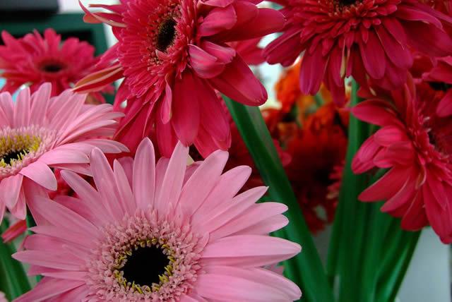 Букет розовой герберы